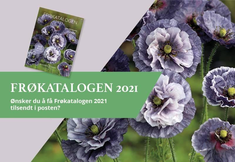 Bestill Frøkatalogen 2021