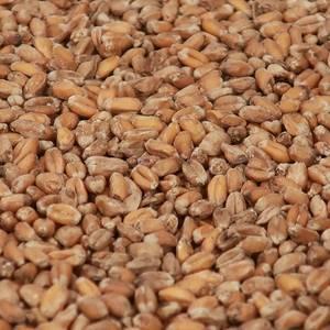 Bilde av Wheat Blanc Malt (EBC 3,5-5)