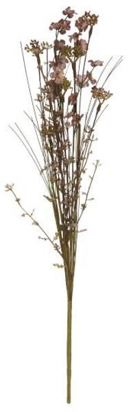Silkeblomst Malva