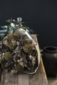 Bilde av Silkeblomst Malva