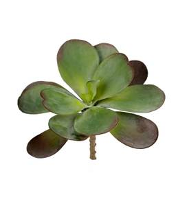 Bilde av Succulent kvist