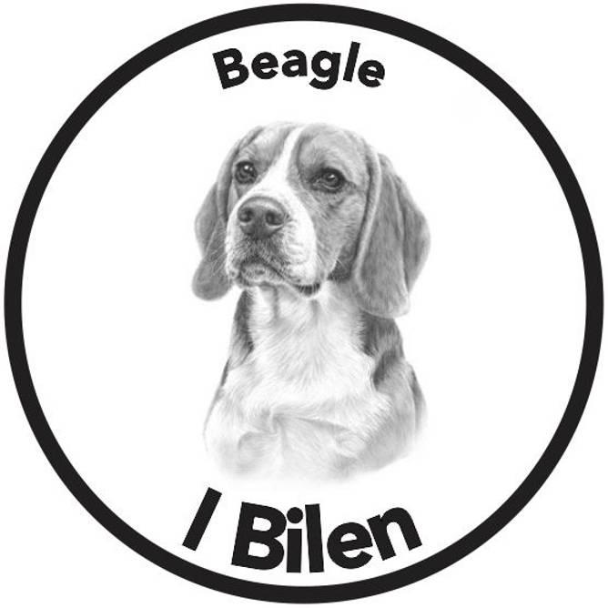 Bilde av Beagle I Bilen Klistremerke