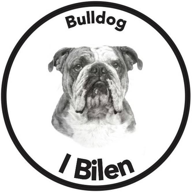 Bilde av Bulldog I Bilen Klistremerke