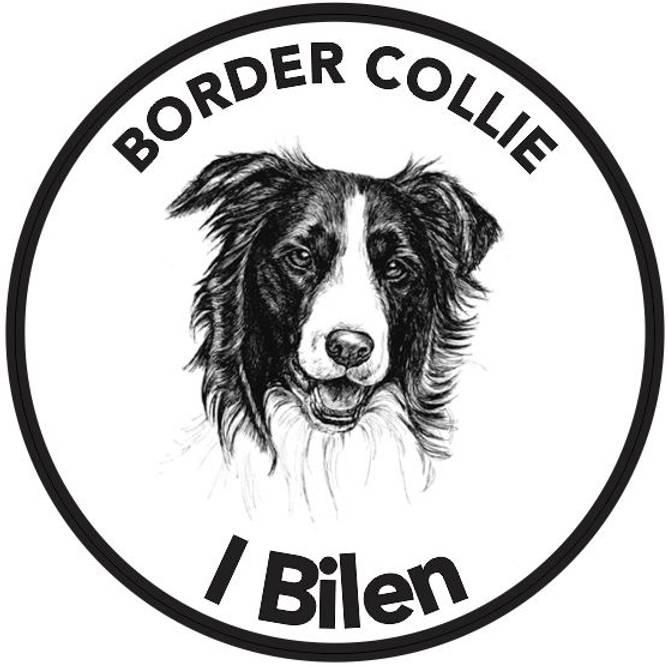 Bilde av Border Collie I Bilen Klistremerke