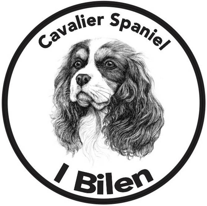 Bilde av Cavalier Spaniel I Bilen Klistremerke