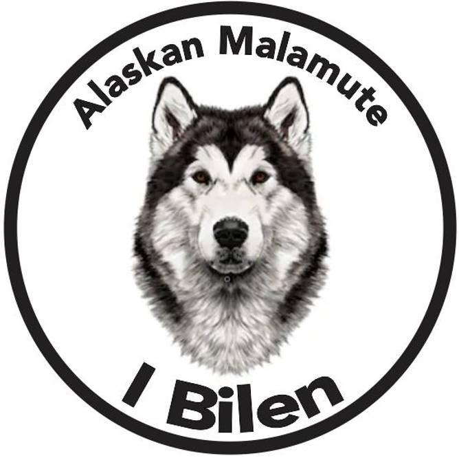 Bilde av Alaskan Malamute I Bilen Klistremerke