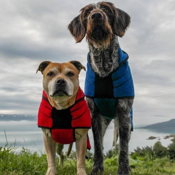 Image of LANA - wool dog coat