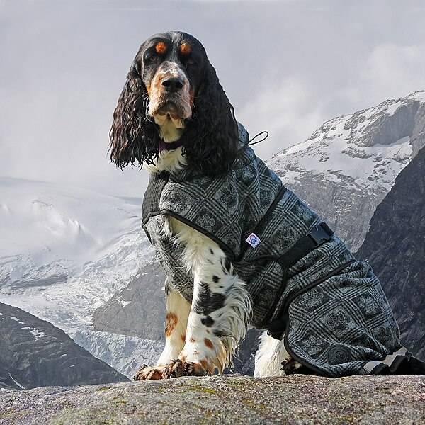 Image of Wool dog coat model FROST