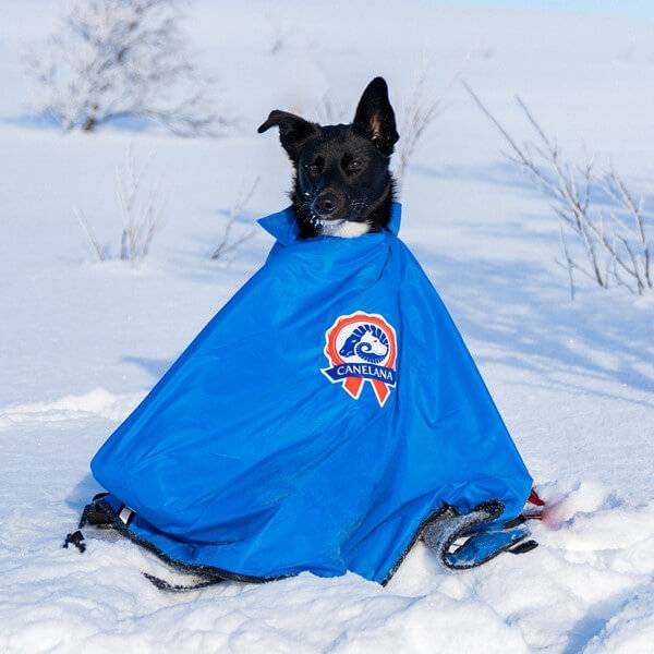 Image of Thermal blanket for dogs with windproof shell