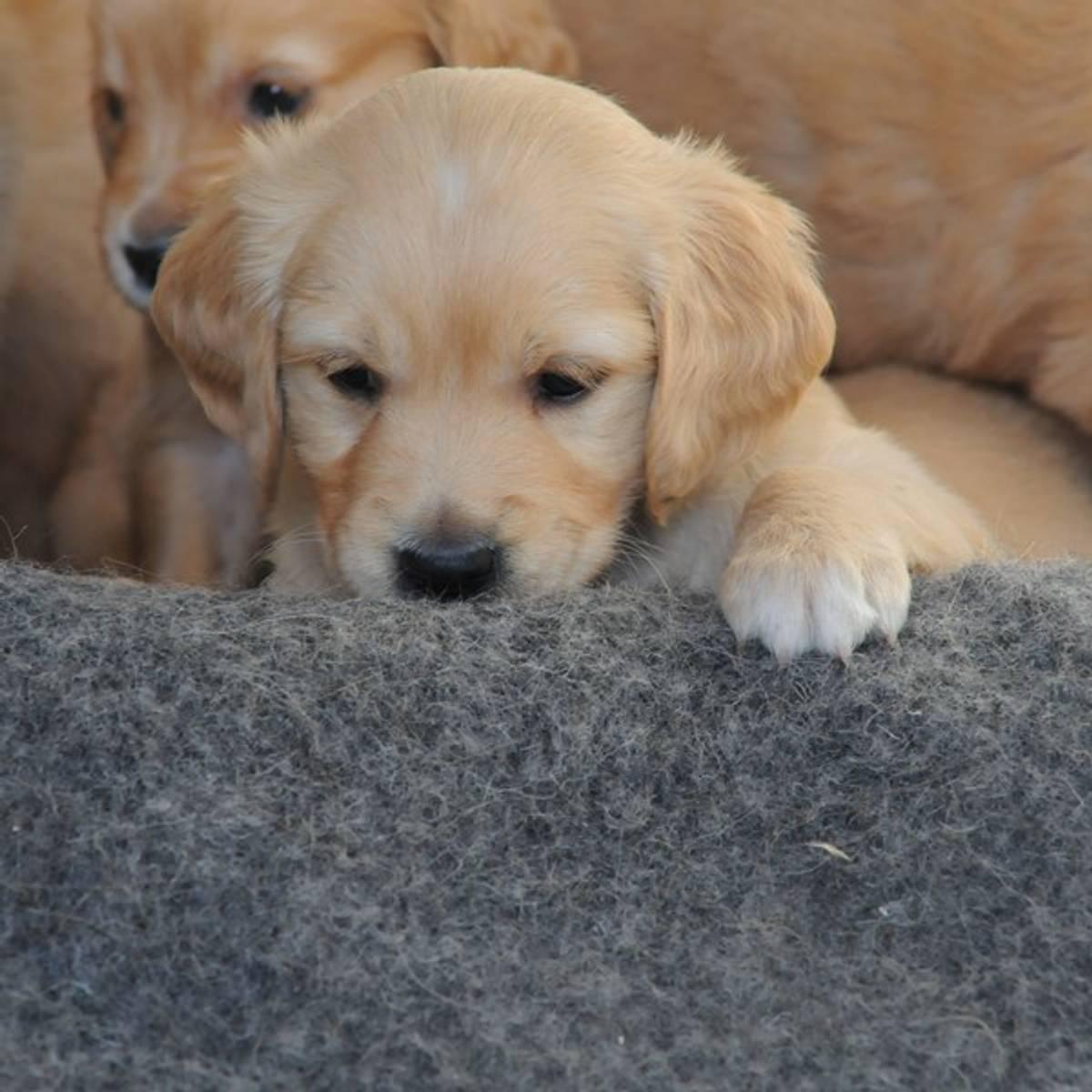 Hundeteppe i ren ull