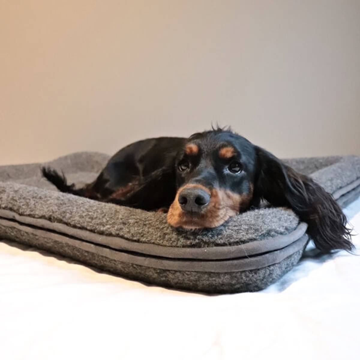 Dog bed in wool with raised edges