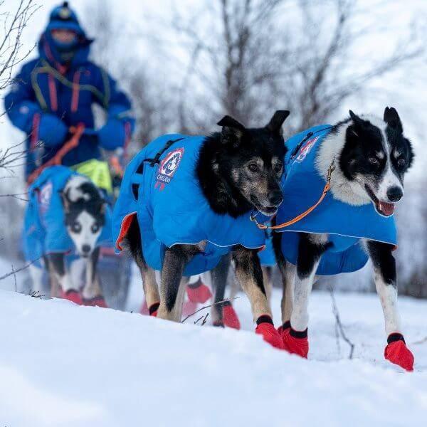 Image of RACING - Dog coat