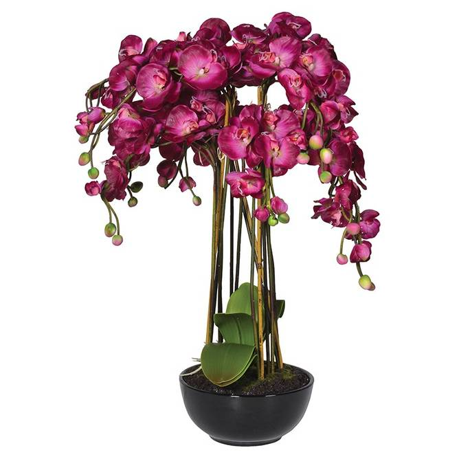 Bilde av Orchid Phalaenopsis Large Plants in Black Ceramic
