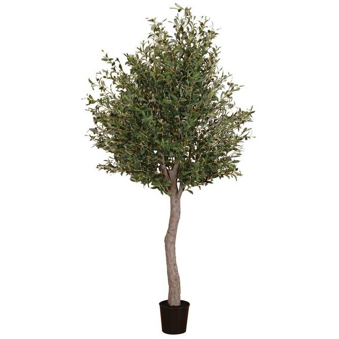 Bilde av NATURAL GIANT OLIVE TREE