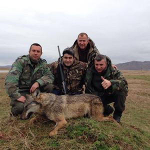 Bilde av Ulvejakt I Makedonia