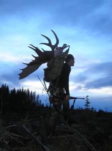 Bilde av Elgjakt i British Columbia