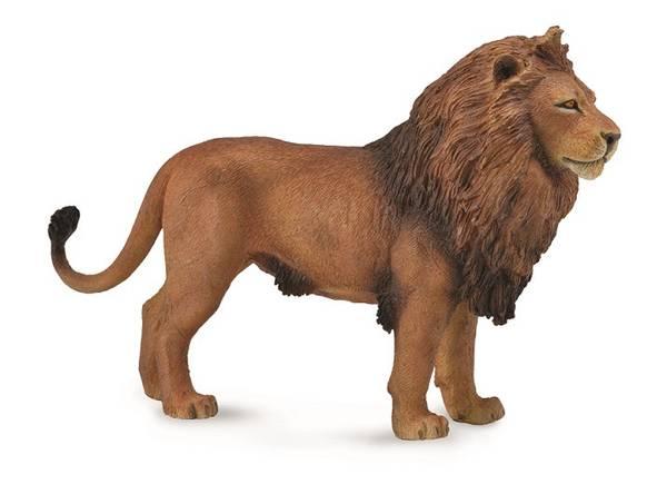 Bilde av Afrikansk Løve – L – 88782