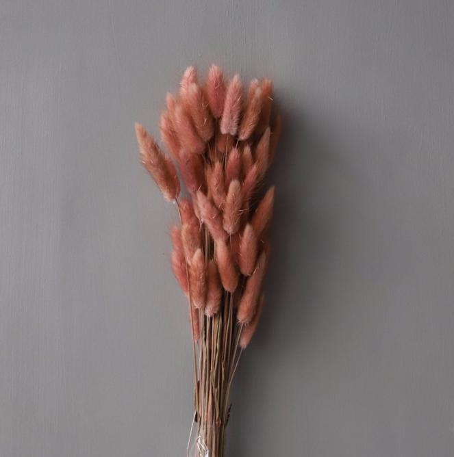 Bilde av Cooee Dried Flowers Lagurus