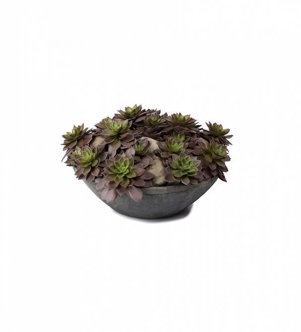 Bilde av Succulent 16 cm