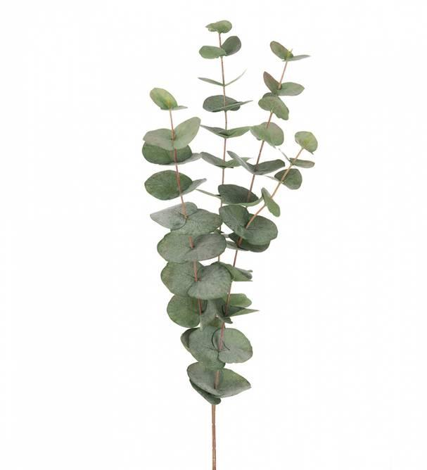 Bilde av Eucalyptus 60 cm kort stilk