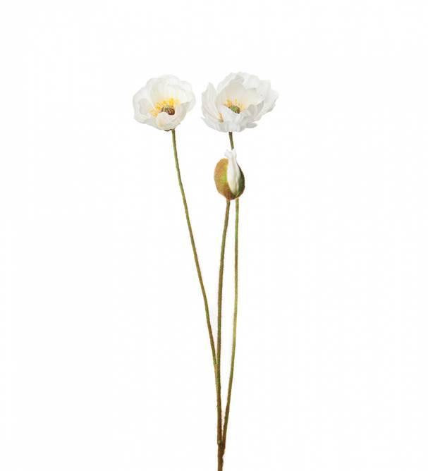 Bilde av Valmue Hvit 75 cm