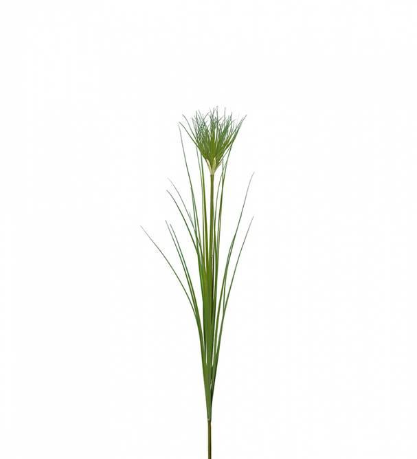 Bilde av Papyrus 105 cm