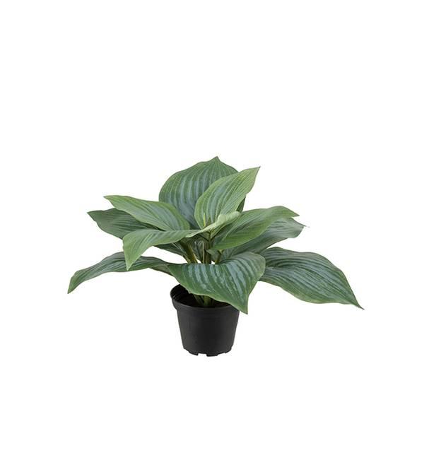 Bilde av Grønn plante