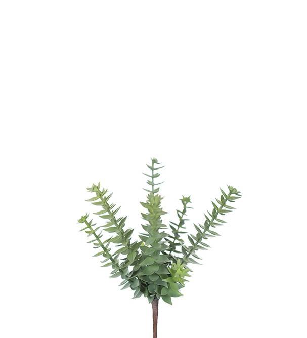 Bilde av Succulent 20cm