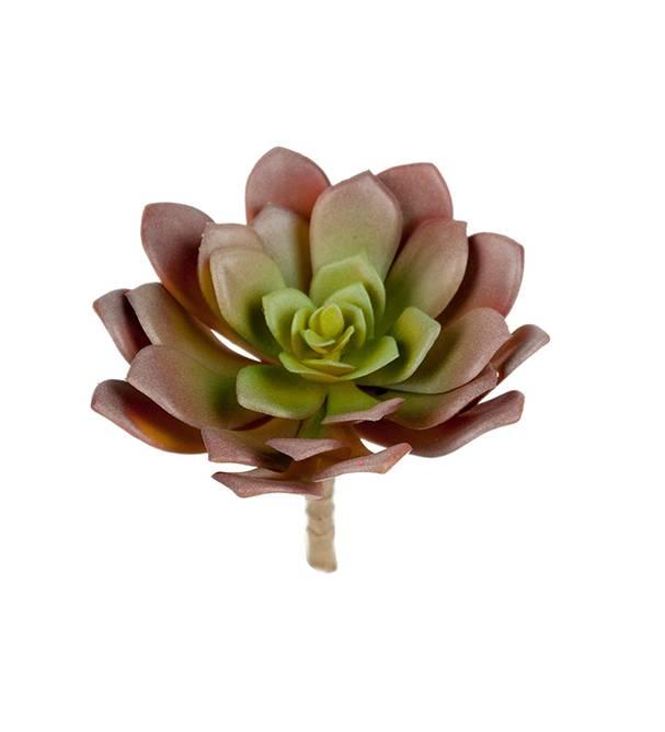Bilde av Succulent 14 cm