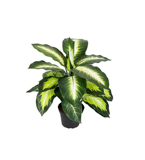Bilde av Prickblad 48 cm