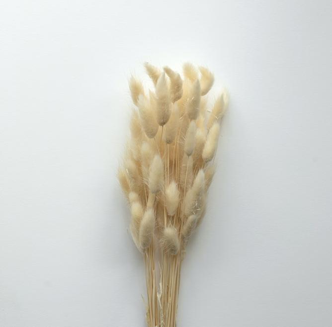 Bilde av Cooee Lagurus Hvite strå