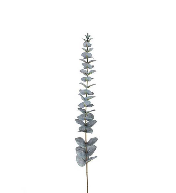 Bilde av Eucalyptus 85 cm
