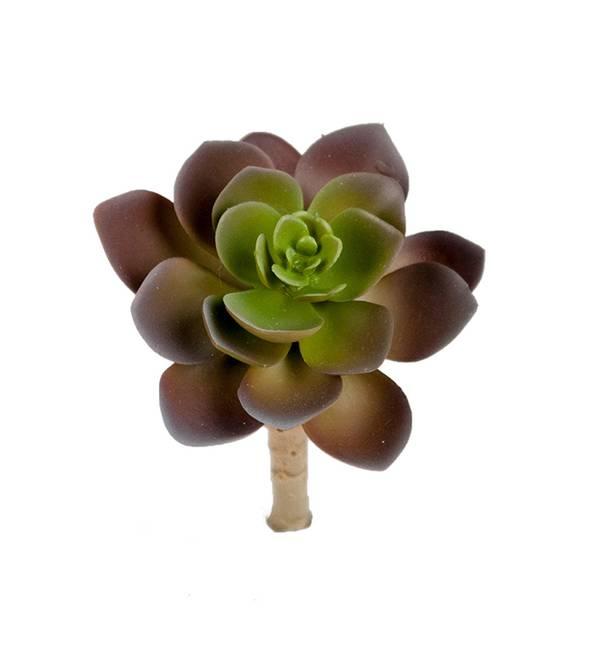 Bilde av Succulent 12 cm