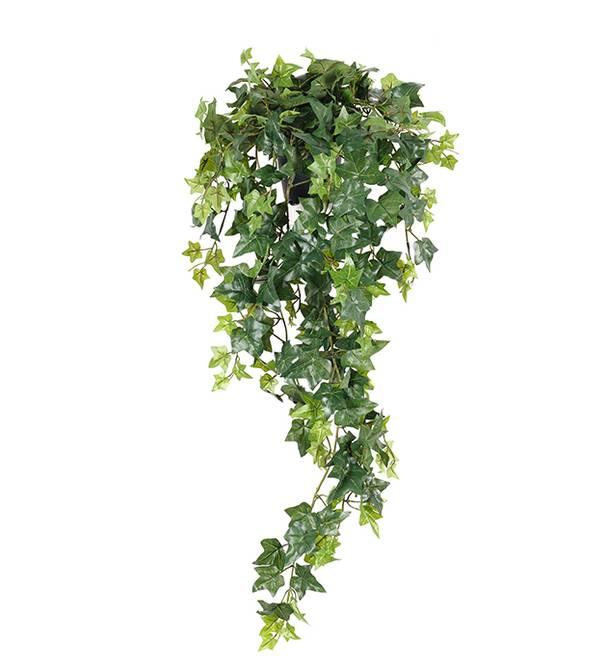 Bilde av Murgröna 85 cm