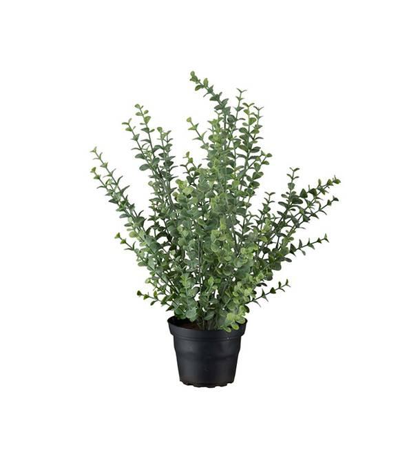 Bilde av Eucalyptus 40 cm