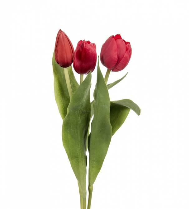 Bilde av Tulipan 36 cm