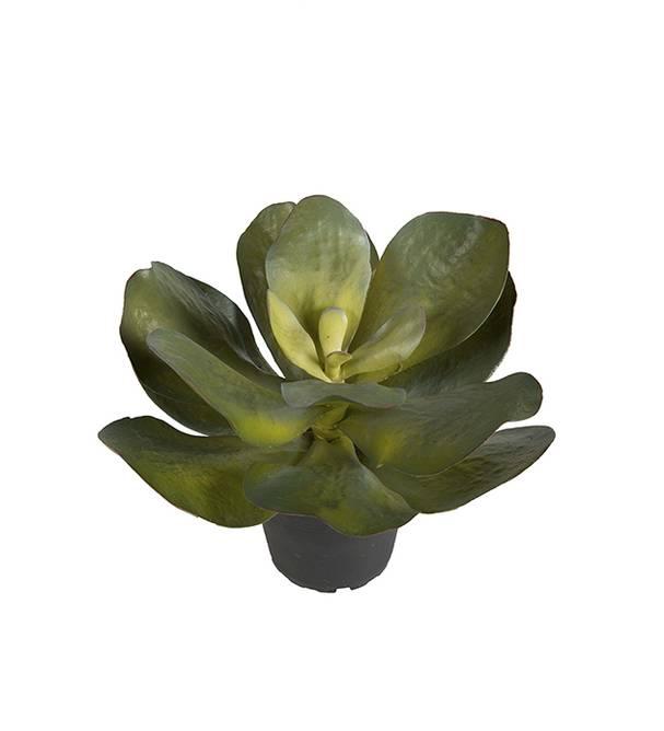 Bilde av Succulent 22 cm
