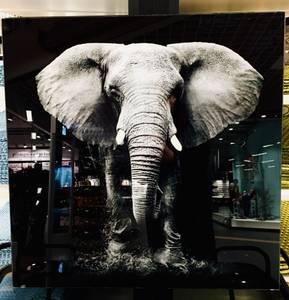 Bilde av Glassbilde elefant 50x50