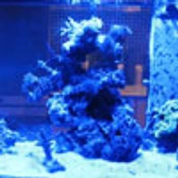 Bilde av Akvarie LED