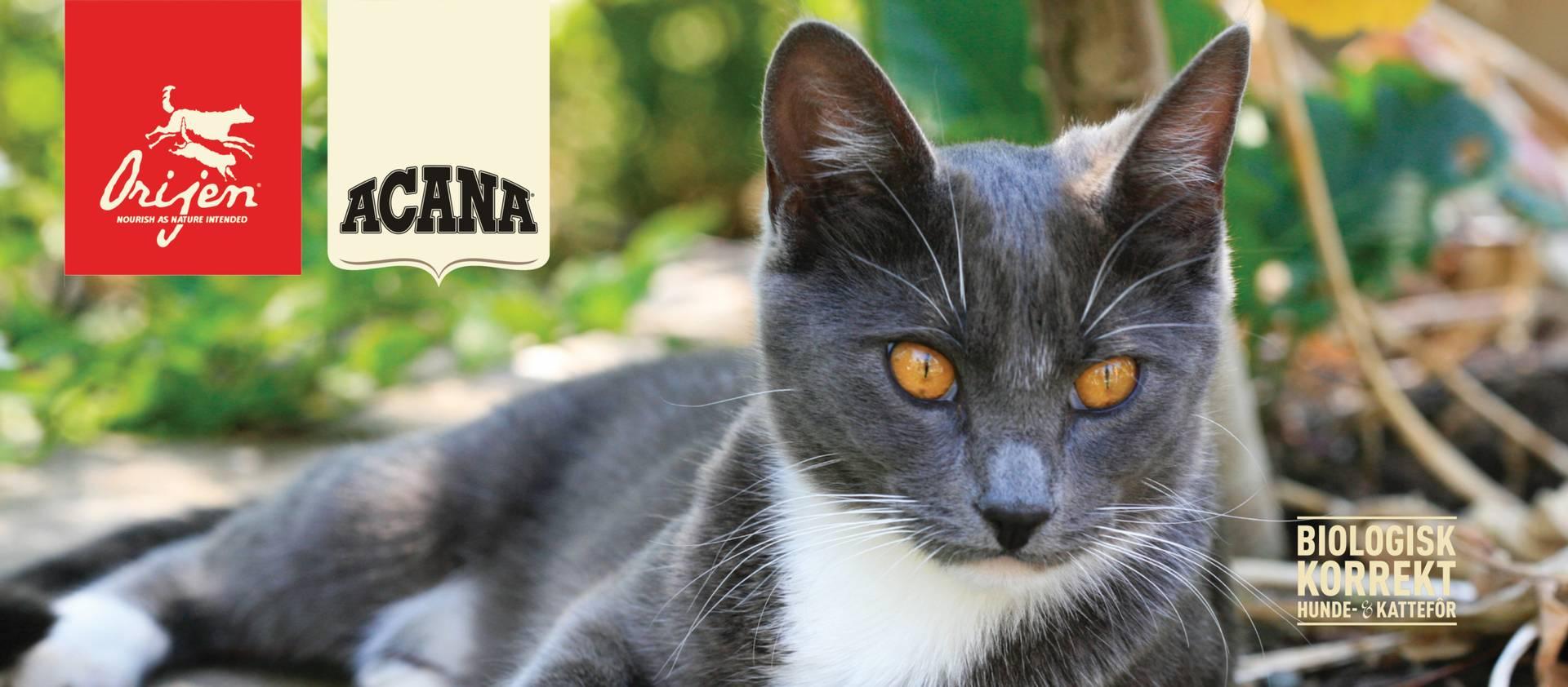 Acana kattemat, kvalitetsfor til katt fra Canada, kornfri kattemat, kattemat til kattunger, kattemat til voksne katter, kattemat til eldre katter, kattemat til innekatter, sunn kattemat, food for cats, grainfree food for cats, food for kittens,
