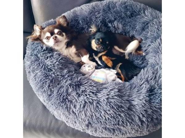 Bilde av Fluffy beroligende seng POPULÆR!!