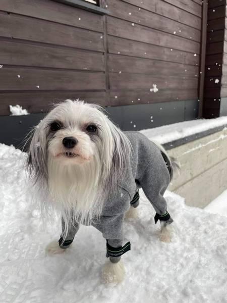 Bilde av Tana ulldress 'Best selger hos små hundene'