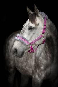 Bilde av Horse Unique Grime/pus