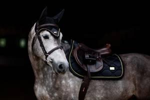 Bilde av Equestrian Stockholm, Ørehette,Black Gold