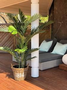 Bilde av Kentia palme H:160
