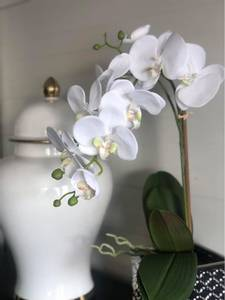 Bilde av Orkide i potte