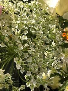 Bilde av Allium