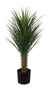 Bilde av Yucca palme