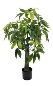 Bilde av Pachira plante