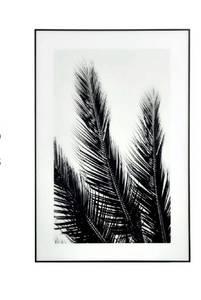Bilde av Black & White Palms